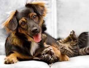 Pet Stains and Odors York PA 717-848-2064